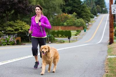 散歩で飼い主と走る犬