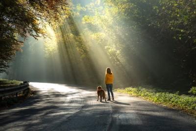 涼しそうな日陰を散歩する犬と飼い主