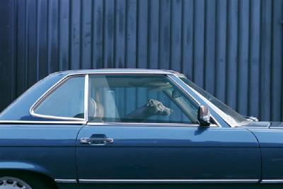 青い車の中にいる犬