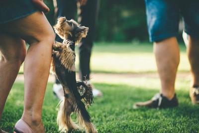 足に飛びつく子犬