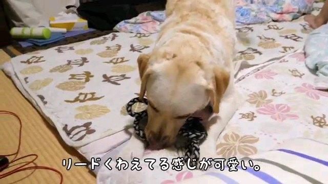 リード~字幕