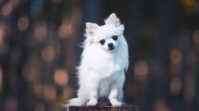 首をかしげてこちらを見つめる犬