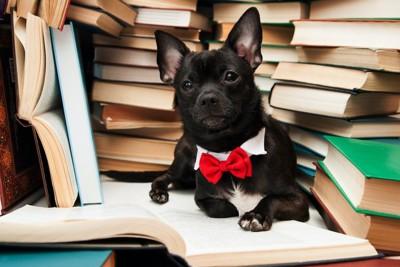 たくさんの本と蝶ネクタイの犬