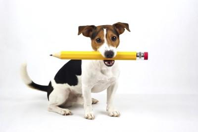 鉛筆を咥えた犬
