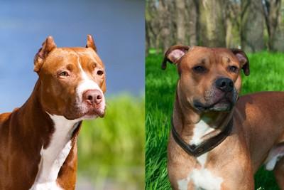 2つの犬種