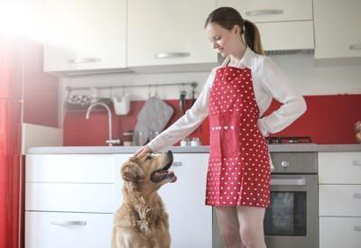 キッチンでエプロンをした女性と犬