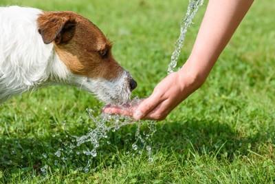 手から水を飲んでいる犬
