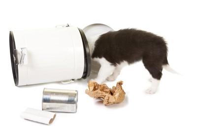 倒れたゴミ箱を覗く犬