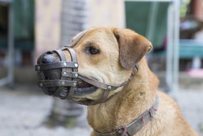 メッシュ型の口輪を付けている犬