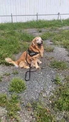 遠くに座る犬