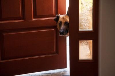 ドアから顔をのぞかせる犬