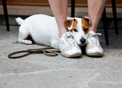 足の間にあご乗せする犬