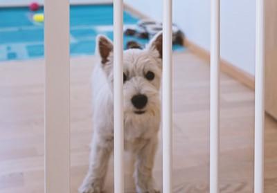 ペットゲートと白い犬