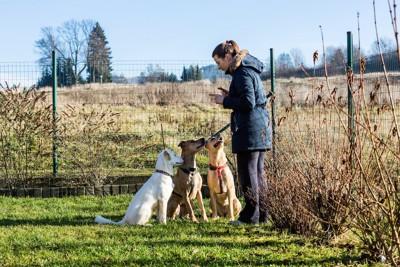 女性トレーナーの指示を聞く三匹の犬