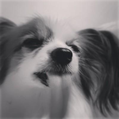 犬の性格が合わない