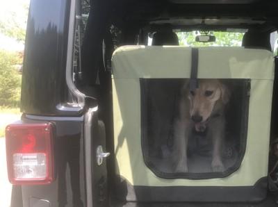 車の中のケージに入れられた犬