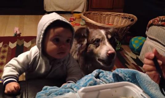 並んで座る犬と赤ちゃん