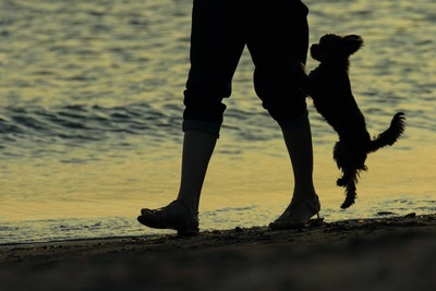 海を散歩する犬