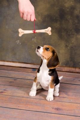 吊るされた骨を見る犬