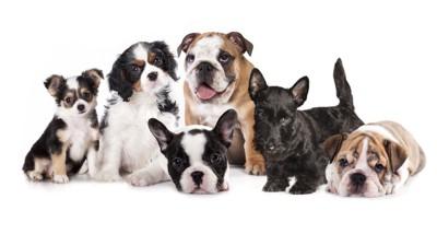 子犬の集合