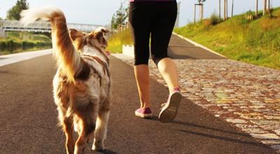 90773403 飼い主と走る犬