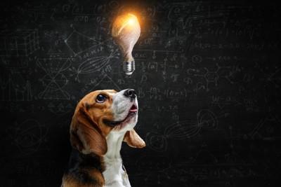 黒板の前で電球を見つめる犬