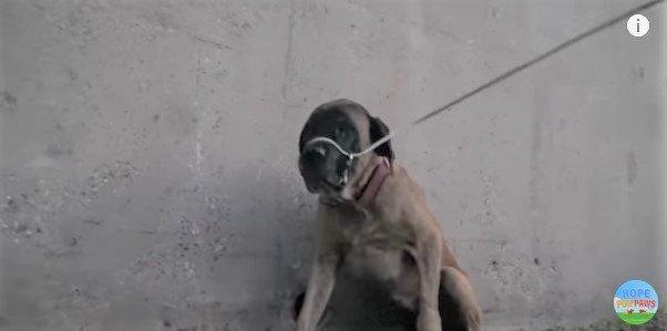 鼻づらにワイヤがかかった犬