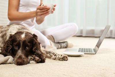 床でパソコンを広げている飼い主の隣でお尻を向けて伏せている犬