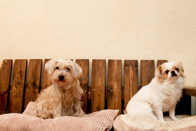 ベンチに座っている犬2匹