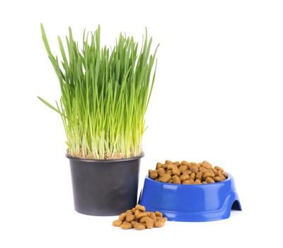 ペット用の草とご飯