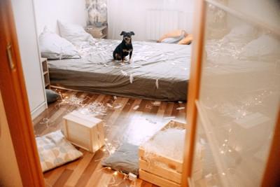 散らかった部屋と犬