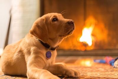 暖炉の前でくつろぐ犬
