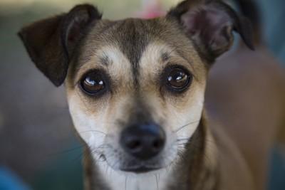 こちらを見つめる瞳の大きいミックス犬