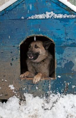 雪の中の犬小屋