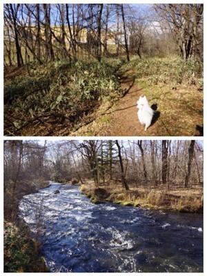 熊笹の散策路と湯川