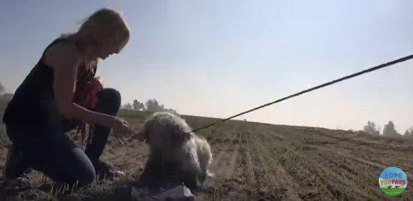咬みつこうとする犬
