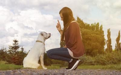 しゃがんで指示を出す女性と座る白い犬