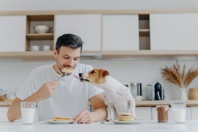 食事中の男性に近づいて舌を出す犬