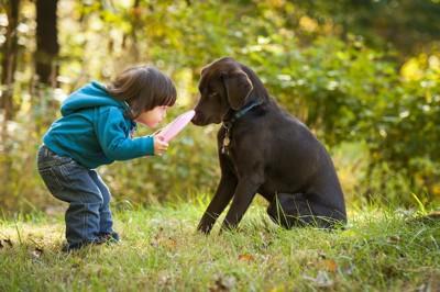 犬を遊びに誘うフリスビーを持った子供