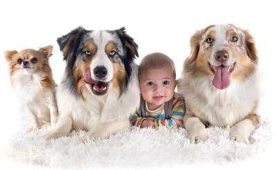 赤ちゃんと3匹の犬