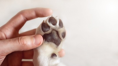 犬の肉球アップ