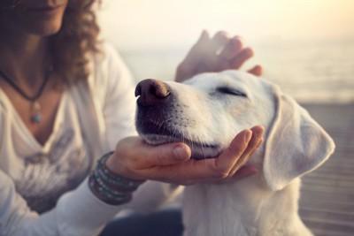 飼い主の手にあごを置いて目を閉じる白い犬