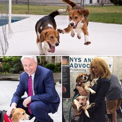 スーツを着た男性と犬とその他の写真がまとまった写真