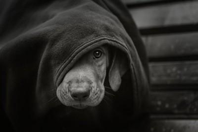 モノトーンの悲しそうな毛布をかぶった犬