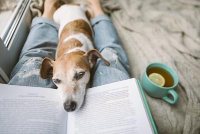 読書する飼い主の足の間で眠る犬