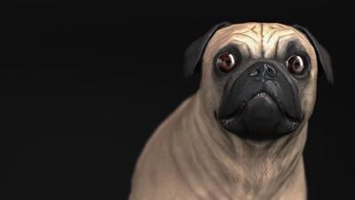 目を見開いて驚いているパグ