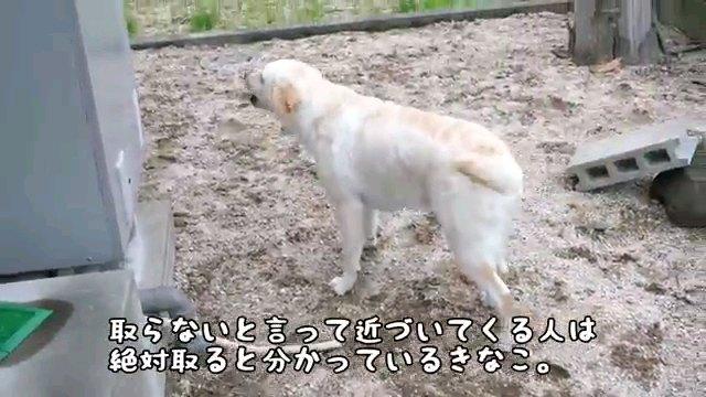 取らないと~字幕