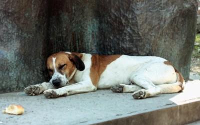 コンクリートの上で寝る犬