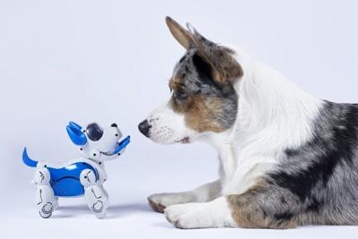 ロボット犬とコーギー