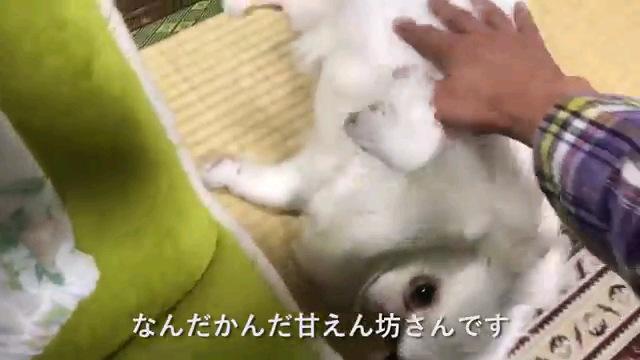 なんだかんだ〜字幕